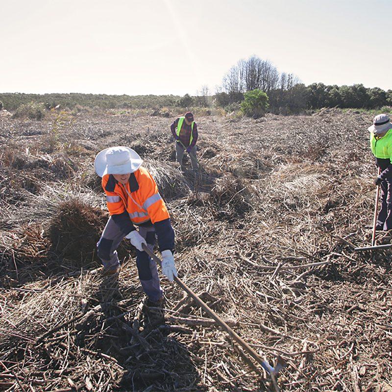 Port Waratah Conservation Volunteers raking planting site